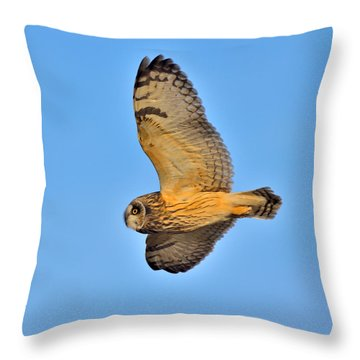 Short-eared Owl In Flight Throw Pillow