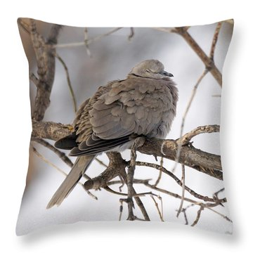 Sleeping Beauty Throw Pillow by Lori Tordsen