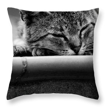 Throw Pillow featuring the photograph Sleeping by Laura Melis