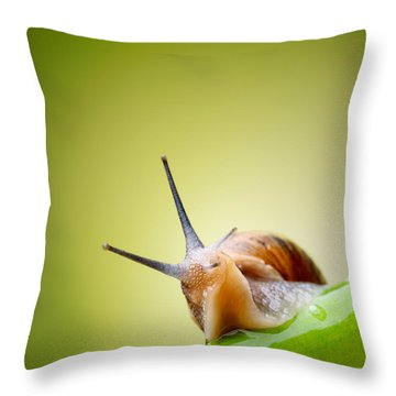 Invertebrate Throw Pillows