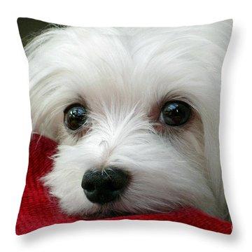 Snowdrop The Maltese Throw Pillow