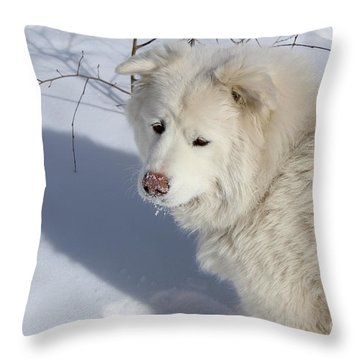 Snowy Nose Throw Pillow by Fiona Kennard
