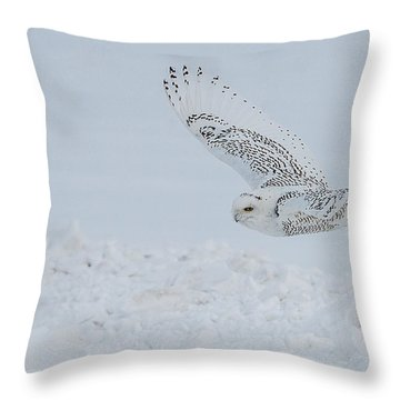 Snowy Owl #2/3 Throw Pillow by Patti Deters