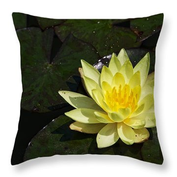 Soaking Up The Sun Throw Pillow by Dave Files
