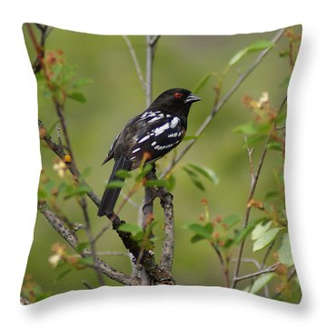 Throw Pillow featuring the photograph Spotted Towhee by Ben Upham III