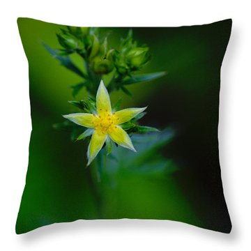 Throw Pillow featuring the photograph Starflower by Ben Upham III