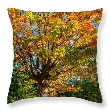 Sugar Maple Throw Pillow by Steve Harrington