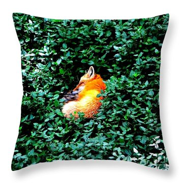 Throw Pillow featuring the photograph Sweet Slumber by Deena Stoddard