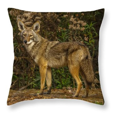 The Coyote Throw Pillow by Ernie Echols