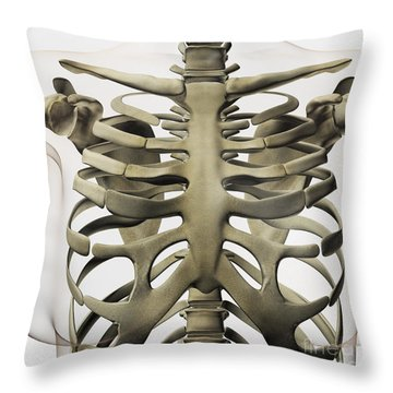 Three Dimensional View Of Female Throw Pillow by Stocktrek Images