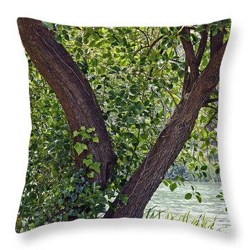Throw Pillow featuring the photograph Tree At Stow Lake by Kate Brown