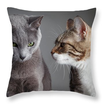 Domestic Cat Throw Pillows