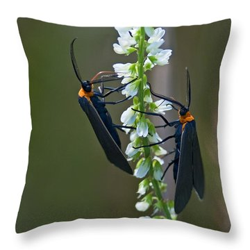 Two Of A Kind... Throw Pillow