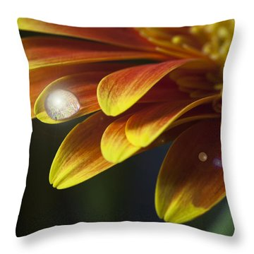 Waterdrop On A Gerbera Daisy Petal Throw Pillow