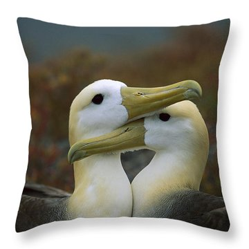 Waved Albatross Pair Bonding Galapagos Throw Pillow by Tui De Roy