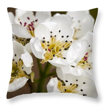 Beautiful White Spring Blossom Throw Pillow