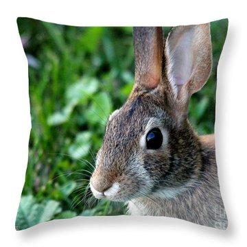 Wild Rabbit Throw Pillow by J McCombie