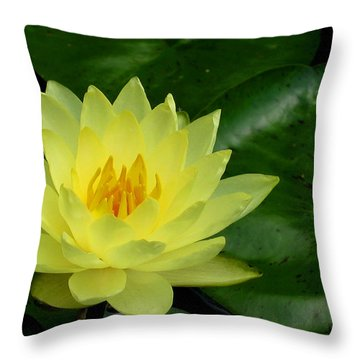 Yellow Waterlily Flower Throw Pillow