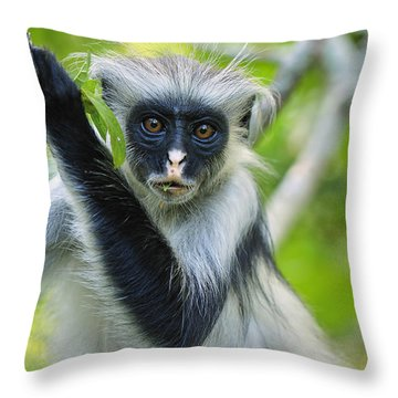 Zanzibar Red Colobus In Tree Jozani Throw Pillow