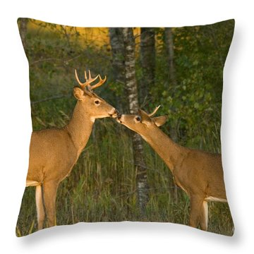 White-tailed Deer Throw Pillow by Linda Freshwaters Arndt