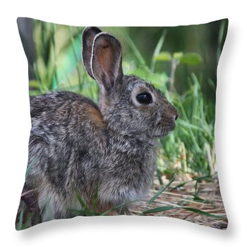 2010 Rabbit Throw Pillow