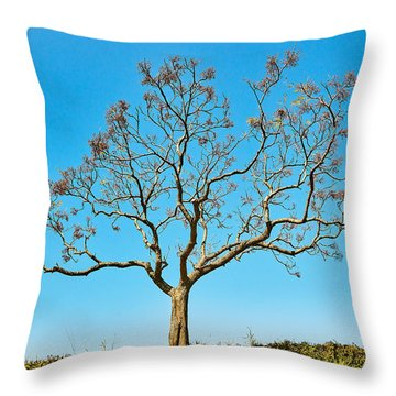 20150217115901fla24142c1p Throw Pillow