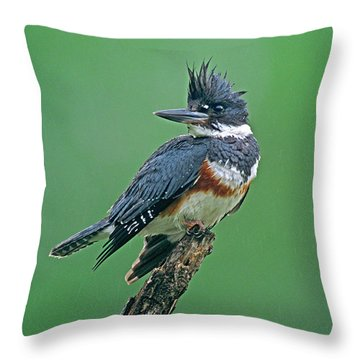 Belted Kingfisher Throw Pillows