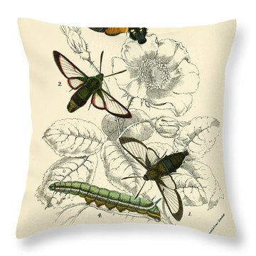 Butterflies Throw Pillow by English School