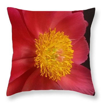 2nd Peony Throw Pillow by Heather L Wright
