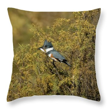 Belted Kingfisher With Fish Throw Pillow by Anthony Mercieca