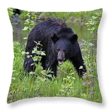 Black Bear Throw Pillow by Linda Freshwaters Arndt