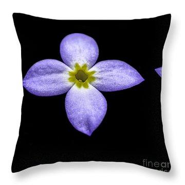 Bluets Throw Pillow by Thomas R Fletcher