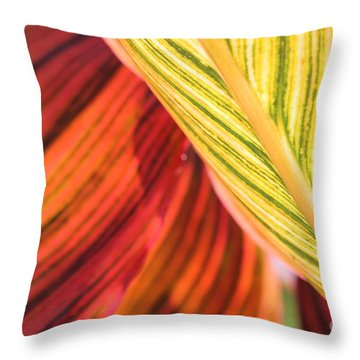 Canna Lily Named Durban Throw Pillow
