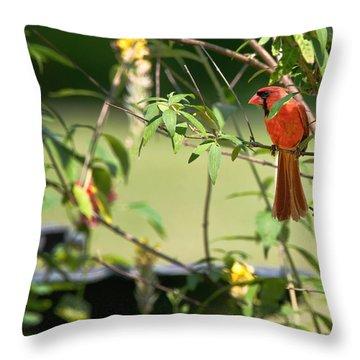 Cardinal Throw Pillow by Bill Wakeley