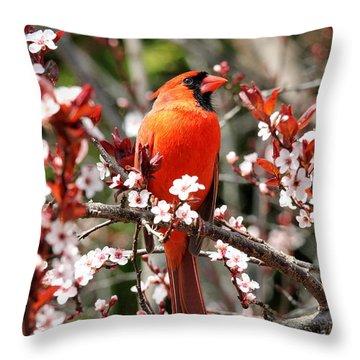 Throw Pillow featuring the photograph Cardinal by Trina  Ansel