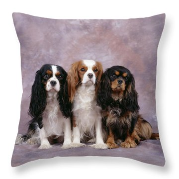 Cavalier King Charles Spaniels Throw Pillow