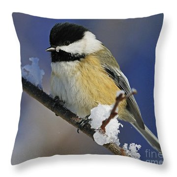 Winter Chickadee... Throw Pillow