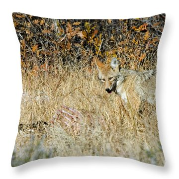 Coyotes Throw Pillow