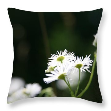 Enlightened  Throw Pillow by Neal Eslinger