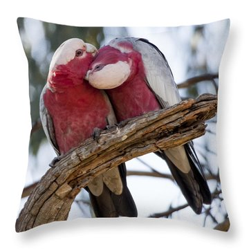 Galahs Throw Pillow by Steven Ralser