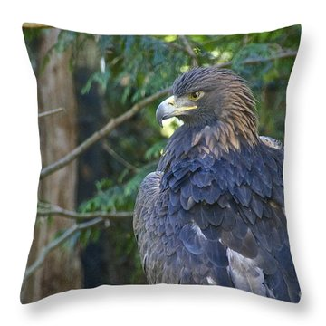 Golden Eagle Throw Pillow by Sean Griffin