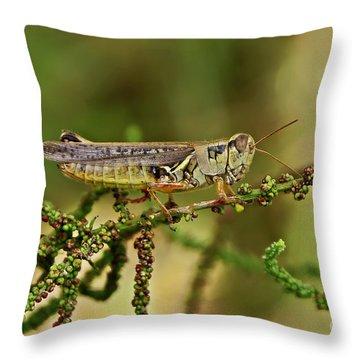Throw Pillow featuring the photograph Grasshopper by Olga Hamilton
