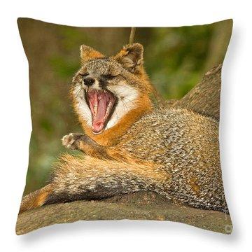 Grey Fox Throw Pillow by Millard H. Sharp