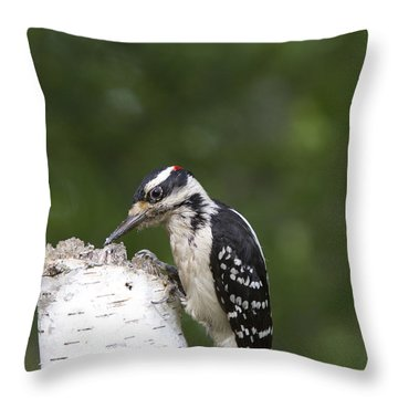 Male Hairy Woodpecker Throw Pillow by Linda Freshwaters Arndt