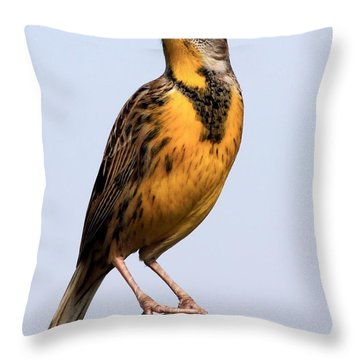 Meadowlark Throw Pillow