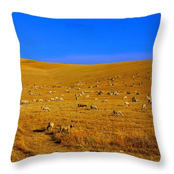 Sheep Grazing In The Countryside Tarquinian Throw Pillow