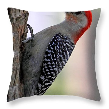 Throw Pillow featuring the photograph Red Bellied Woodpecker  by Meg Rousher