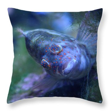Throw Pillow featuring the photograph Redspotted Hawkfish  by Savannah Gibbs