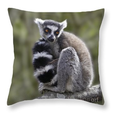 Ring-tailed Lemur Throw Pillow by Liz Leyden