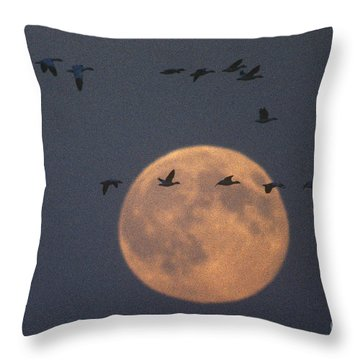 Snow Geese Throw Pillow by James L. Amos